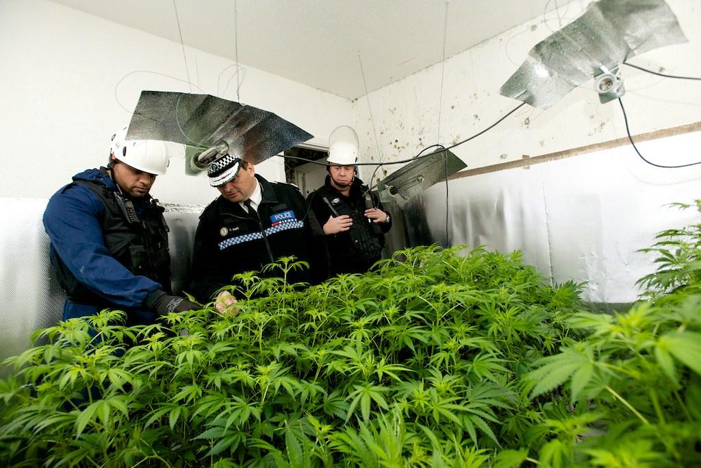 cannabis sops 1