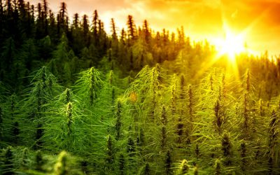 Bureau of Cannabis Control Insight for Cali Cannabusiness Operators