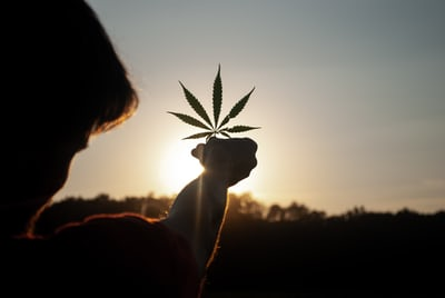 The Ultimate Guide to Vertically-Integrated Cannabis Businesses