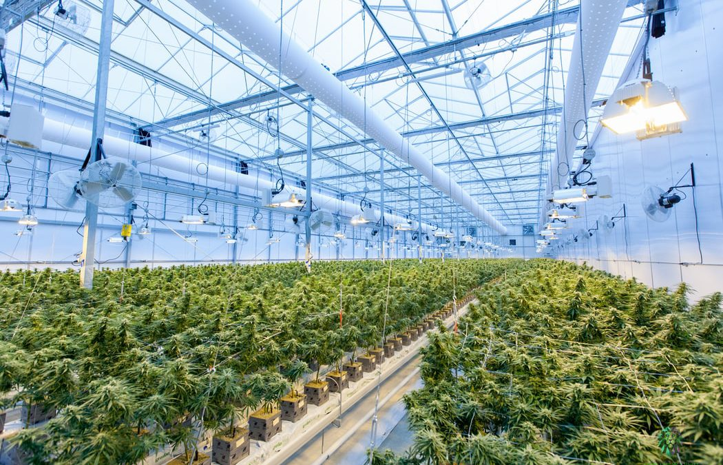 Cannabis Nursery Businesses: The Right Investment for You?