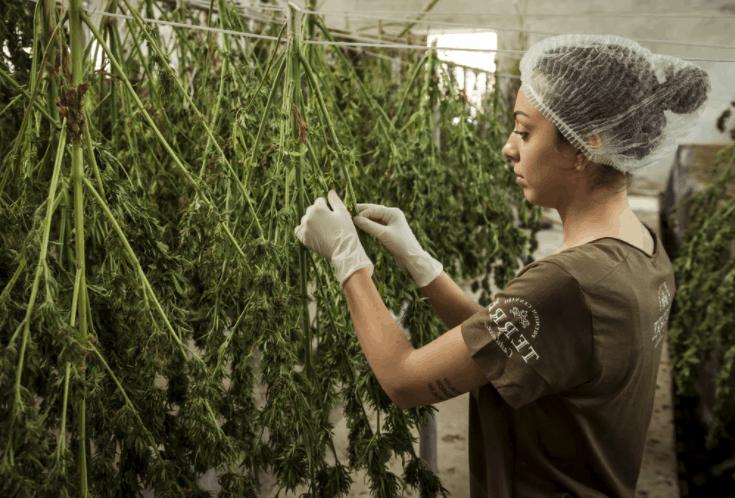 Cannabis Grow Facility Lenders