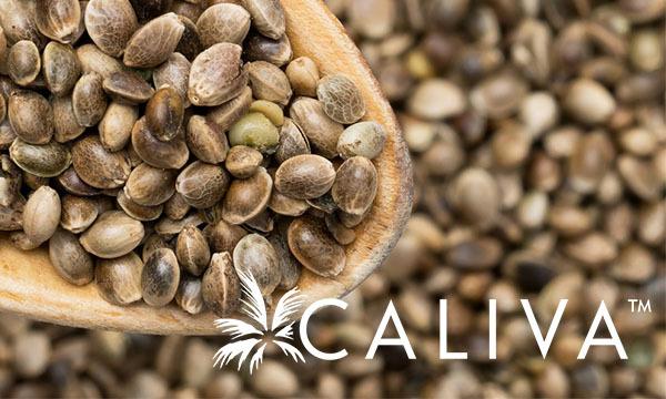 caliva cannabis grow operation cultivator grower