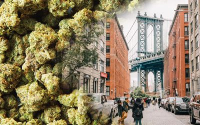 New York Marijuana Legalization: One of the Most Progressive Laws in America