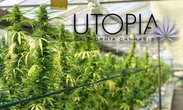 utopia farms cannabis cultivation grower cultivator