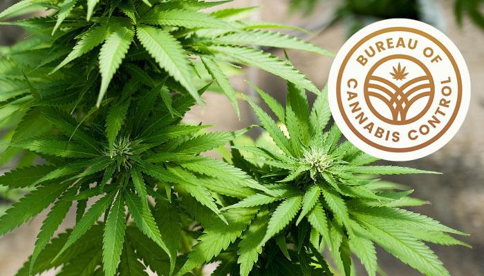 california bureau of cannabis control california cannabis license