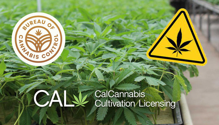 california cannabis license authority