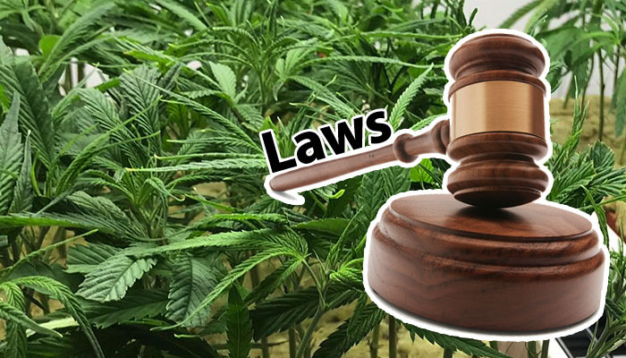 Legalization comes with laws.