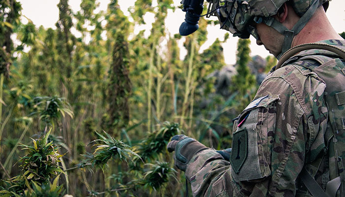 veteran with cannabis michigan marijuana businesses can serve