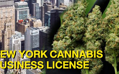 New York Cannabis License Insight