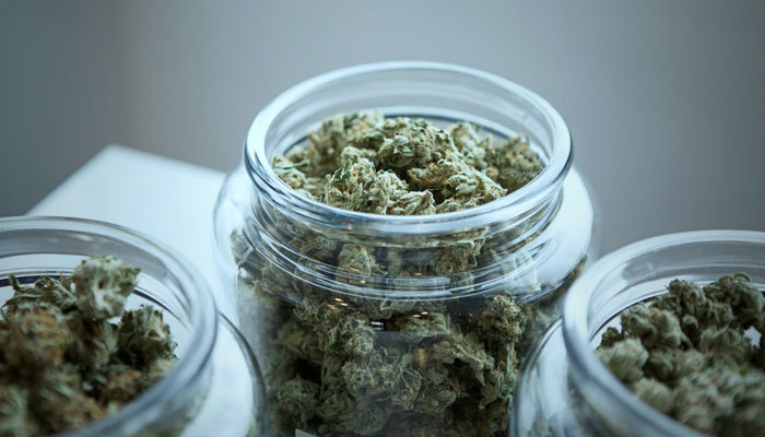 state legal cannabis dispensary 280e damages