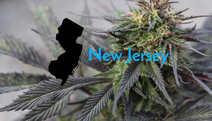 legalized cannabis plants in new jersey