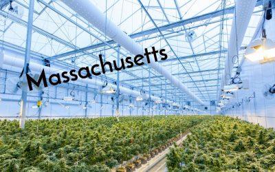 Massachusetts Cultivation License Insight