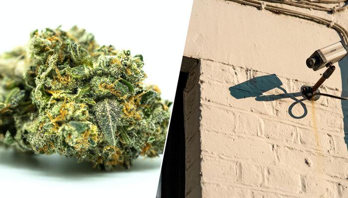cctv and cannabis image