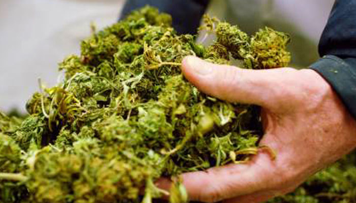 Can New Jersey patients possess medical marijuana?