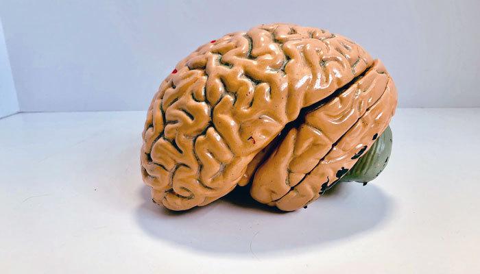 more knowledge brain