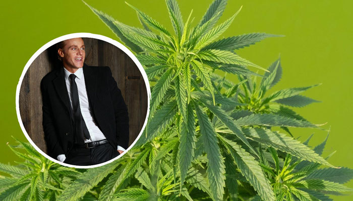 fractional cfo for cannabis businesses