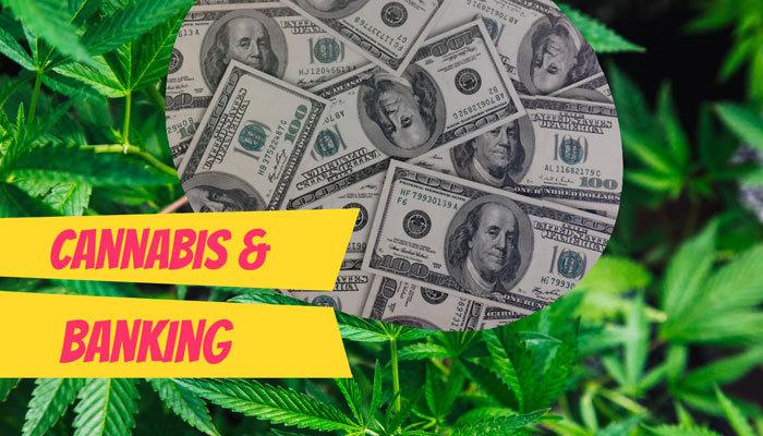 Cannabis Banking California Insight