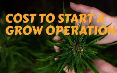 Cost to Start a Grow Operation