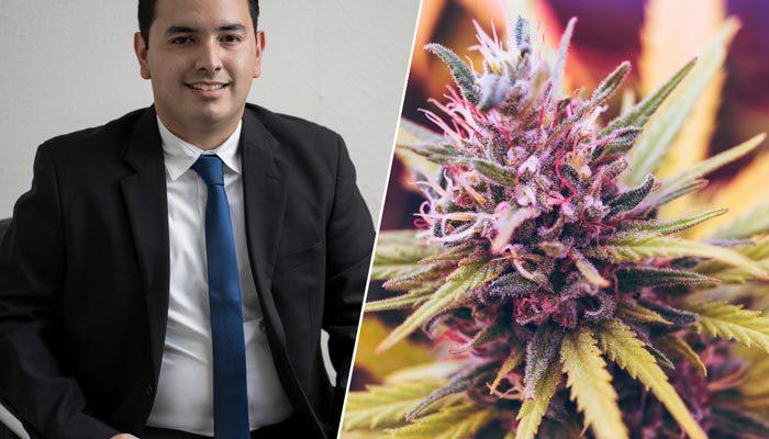cannabis lawyer attorney