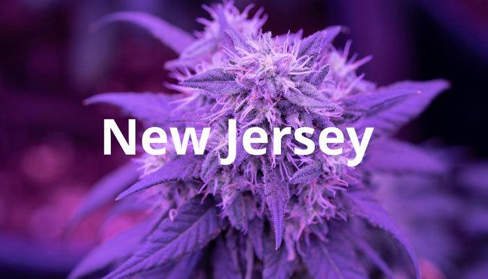 new jersey's medical marijuana
