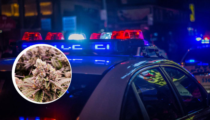 The Marijuana Regulation Mission in NY police lights